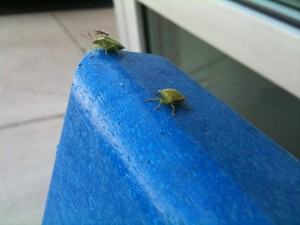 Bugs on a Bench